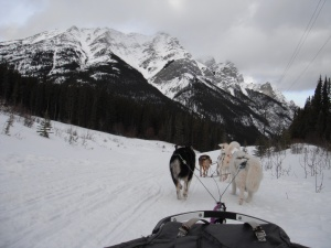 dogsledding, snowy owl, mountains, canmore, rockies, rocky mountains, snow, trails, spray lakes