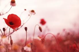 remembrance day, poppies, flanders field, school assemblies, future of remembrance, war, gratitude, veterans
