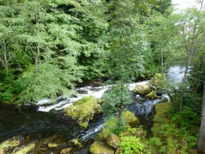 Chock-full-of-spawning-salmon river in Ketchikan, Alaska.